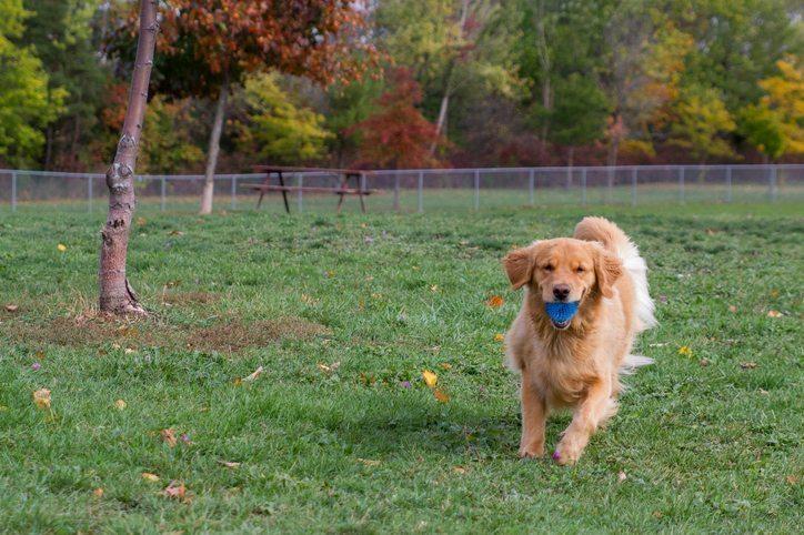 Dog Running in Park