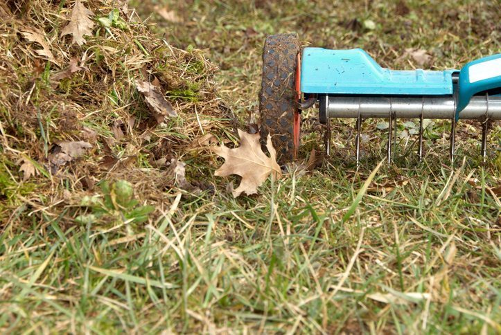 Lawn Aerator - Cool Season Grass