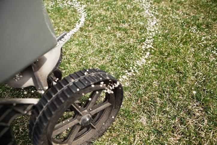 Fertilizing Lawn - Cool Season Grass