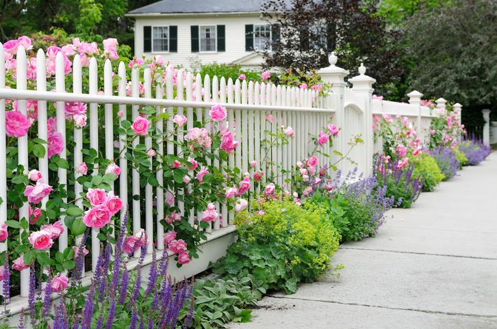 Garden Fence With Roses - Landscape Design