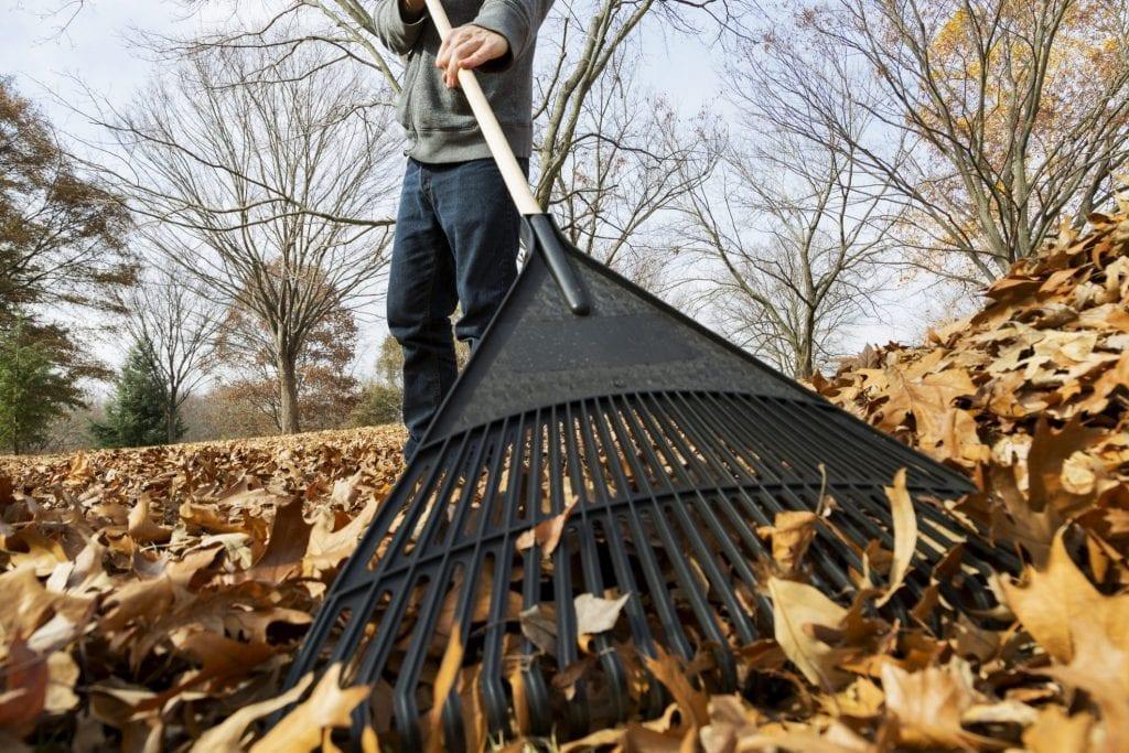 Raking Leaves - Cool Season Grass