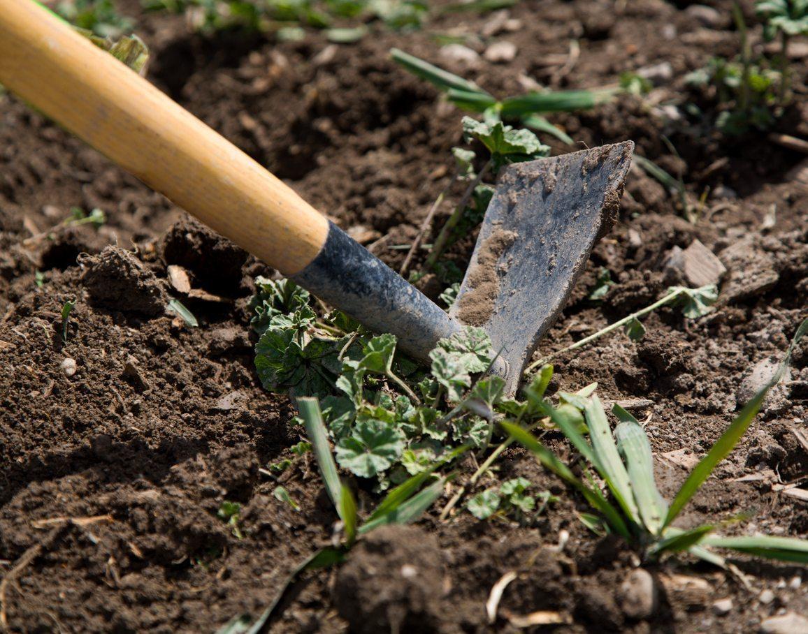 Gardening Tool - Cool Season Grass