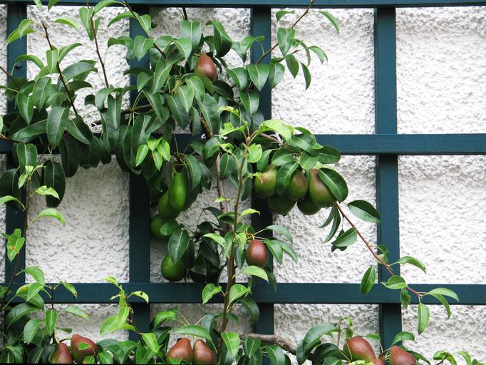 Vertical Fruit Garden